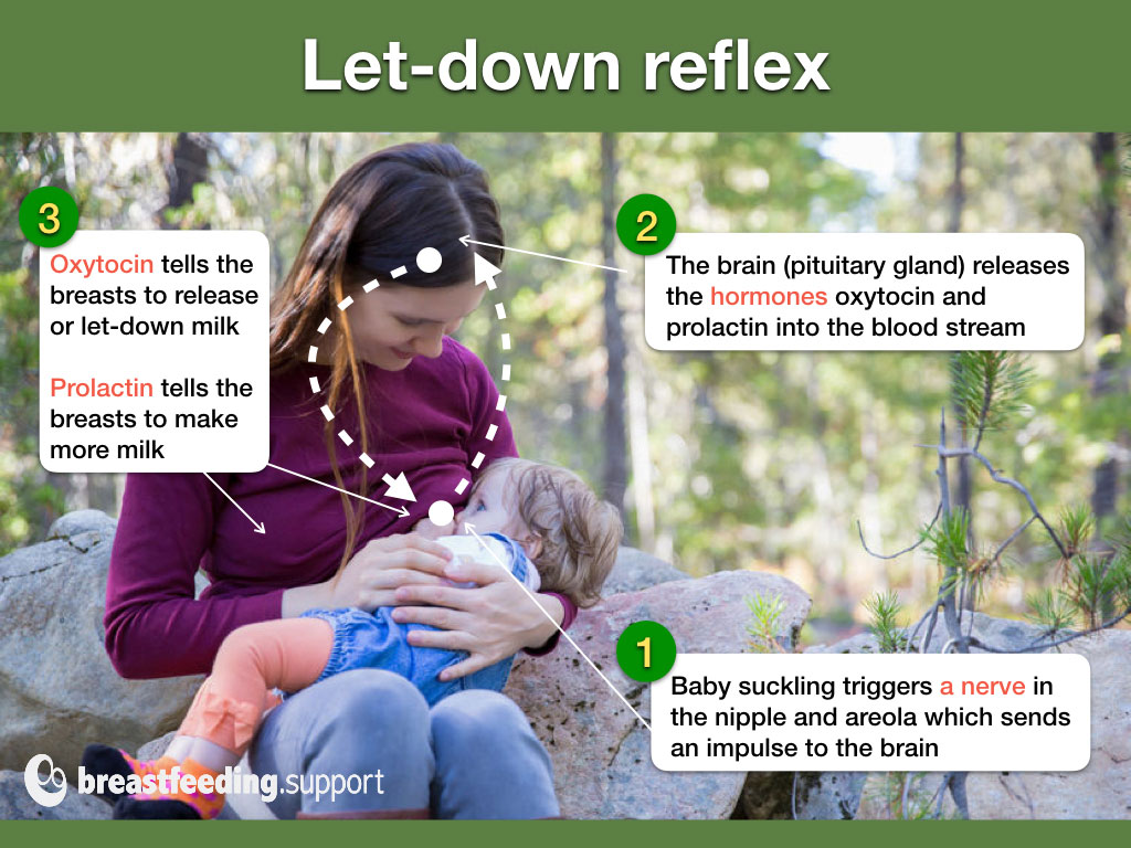 An infographic for the let-down reflex